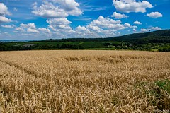 DSC_1445 (Marlon Fried) Tags: landschaft landscape field feld acker getreide cereals crops grain