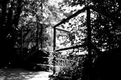 Black summer (Leica M6) (stefankamert) Tags: stefankamert leica m6 rangefinder blackandwhite blackwhite bw sw noir noiretblanc monochrome summer black light ilford fp4 film analog voigtlnder nokton way