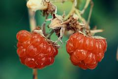 2rasp2 (ArminAreMean) Tags: macro raspberry fruit