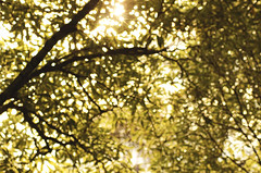 Tree, sun and bokeh (Julia_Kul) Tags: tree sunandbokeh shine sunlight wallpaper soft foliage natural park green spring autumn day leaf bright sunny grass light summer sun blurred sunshine abstract season shiny focus forest backdrop texture garden design color colorful plant beauty blur lush effect beautiful background fresh space nature environment pattern defocus bokeh summe
