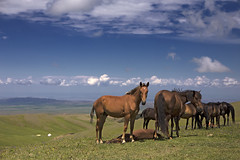 Hi there (monorail_kz) Tags: kazakhstan almatyregion dzungarianalatau dzungaria highlands plateau alatau sky clouds blue green pasture grass summer june animals horse