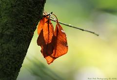 Leaves (Rick & Bart) Tags: leaves nature colour garden rickvink rickbart canon eos70d gnneniyisi thebestofday