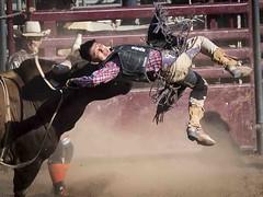 Bull Rider (_bobmcclure_) Tags: bull rider fall allindian rodeo phoenix arizona state fair