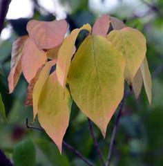 StartOfFallColors (T's PL) Tags: nikon tamron 16300 f3563 di ii vc pzd d7000 douthatstatepark fallcolors leafs nikond7000 outdoor va virginia nikontamron tamronnikon tamron16300f3563diiivcpzd tamron16300