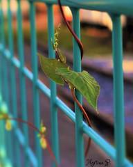 Happy Fence Friday! HFF! (martinap.1) Tags: zaun fence nikond3300 1855mm happyfencefriday happy fenced friday nikon d3300