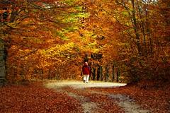 Walk (sevdelinkata) Tags: autumn mountain colors osogovo bulgaria