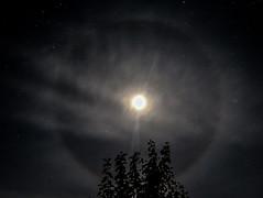 Lunar halo (the tamron tog) Tags: moon halo lunar zenith disc circle round devon uk canon sigma