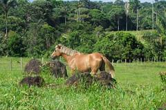 DSCN0463 (AndreAguilarP) Tags: nature horse