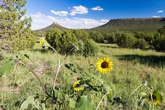 ([ raymond ]) Tags: americansouthwest newmexico southwest img6350 sunflower landscape mountains outdoors nature