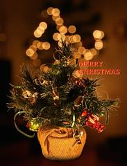 MERRY CHRISTMAS 2014_4144 (Rikx) Tags: christmas family decorations tree home lights peace christmastree christmaslights explore presents christmasdecorations adelaide merry merrychristmas southaustralia christmascard christmas2014