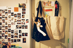 SML_140914_GR1_0013 ( Sean Marc Lee ) Tags: cat bag kitten funny fuji superia 400 ricoh gr1 xtra guabao