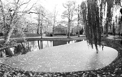 Prinsetuin, Leeuwarden (Jip Moors) Tags: autumn trees bw music white black reflection tree art water netherlands leaves ying north gray shift overcast chapel yang hanging tilt friesland leeuwarden prinsetuin