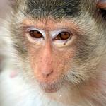 Eye Contact Of Monkey thumbnail