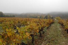 matin de brume 3 (obmm) Tags: mist france fog canon vineyard vine powershot paca provence vignoble brouillard dpp vigne brume vaucluse g12 mormoiron mistyweather comtatvenaissin