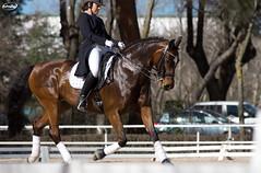 Doma Clsica - Prueba Social (Myprofe) Tags: madrid horse caballo equestrian dressage domaclsica clubdecampovillademadrid pruebasocial ccvm