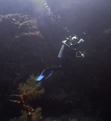 Dive20150209P15 (bobmccormackmobile) Tags: underwater diving olympus lordhoweisland ballspyramid olympusem5