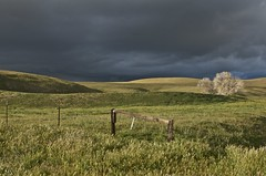 East Of Shandon (goingslo) Tags: clouds raw country gray hills backroads drizzle shandon sanluisobispocounty californiacentralcoast lindatanner goingslo itsinmynaturephotography