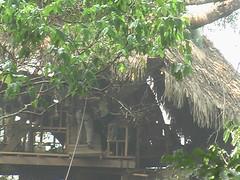 Ziplines Into the Treehouse