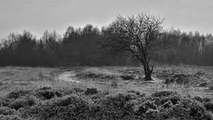 9. Loneliness (-Mathijs-) Tags: winter bw tree netherlands loss loneliness naturereserve moor hdr drenthe bystander fochteloerveen