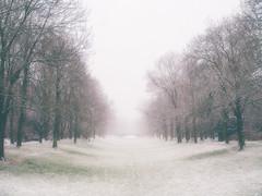 white. (angsthase.) Tags: snow tree green graveyard fog germany deutschland cityscape cemetary nrw grün ruhrgebiet baum dortmund 2014 ruhrpott mft hauptfriedhof micro43 epl5 olympuspenepl5 olympusm25mmf18