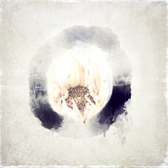 Expression of the Moment (Cathrine Halsor) Tags: fineart mindfulness enso memoriesbook iphoneography