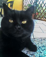Tommy (Massimo Buccolieri) Tags: cats tommy camilla gatti pallina gattonero eos700d maxbcc