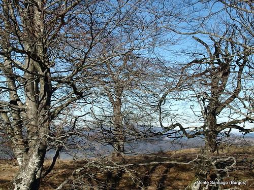 monte-santiago-senderismo-sermar-valladolid-ruta365 (27)