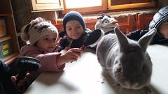 orvalle-infantil-granjaelacebo (9)