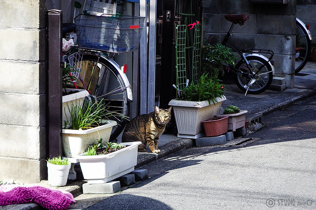 Today's Cat@2015-02-28