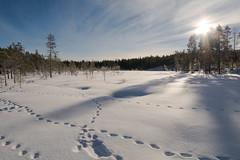Swamp - National Park of Helvetinjärvi (timohannukkala) Tags: winter snow nature finland nationalpark nikon swamp fi kansallispuisto ruovesi helvetinjärvi pirkanmaa d7100