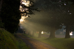 Raggi di febbraio (Gianni Armano) Tags: alberi photo italia foto piemonte di 23 sole inverno colori luce gianni alessandria raggi mattino febbraio viale 2015 armano valmadonna