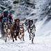World Championship 2015 - sled dog race