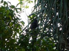 Monkey Hiding