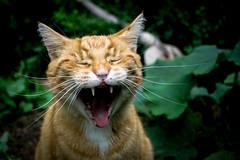 Happiness_my happy cat (photalena) Tags: pet cat happy 7dwf