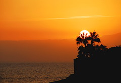 Silhouette (petrk747) Tags: voyage travel cruise sunset sea sky sun travelling beach nature sunrise photo nikon heaven outdoor silhouete palm atlantic tenerife atlanticocean canaryislands costaadeje nikond200 caviardreams