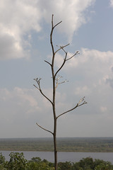 Tree on top of the High Temple