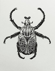 Goliathus orientalis (bratchuli) Tags: goliathus orientalis goliath beetle ink dotwork paper realistic art illustration entomology insect
