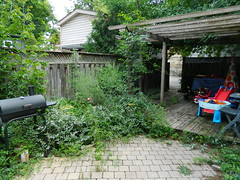 Playter Estates Toronto backyard clean up before by Paul Jung Gardening Services (Paul Jung Gardening Services) Tags: broadview weeding torontogardencleanup