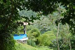 P1020007 (Mayan_princess) Tags: chiapas argovia finca resort caf coffee kaffee paraso paradise vegetacin vegetation verde green ro river spa relajacin relax forest selva orgnico autosostenible