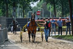 070fotograaf_20160728_042.jpg (070fotograaf, evenementen fotograaf) Tags: harnessracing racing draverij drafsport paardensport paardesport harness paardenmarkt holland netherlands nederland 070fotograaf kortebaandraverij voorschoten 2016 paarden draven kortebaan
