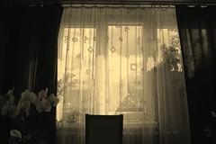 SAM_8964b_jnowak64 (jnowak64) Tags: poland polska malopolska cracow krakow krakoff bronowice architektura wnetrze okno kwiaty lato mik sepia