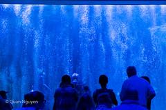 FujiXE2-0174 (QTTheory) Tags: cvg cincinnati ohio newport aquarium newportaquarium fujifilm fujinon xe2 xf 1855mmf284rlmois