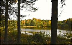 Waldfenster (mayflower31) Tags: wald forest bume trees teich pond herbst autumn