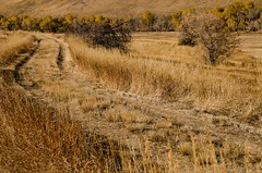 Prairie Autumn (catmccray) Tags: colorado hildebrandranchparkopenspace fall autumn foothills dirtroad prairie