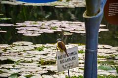 DSC_5410 (sergeysemendyaev) Tags: 2016 rio riodejaneiro brazil jardimbotanico botanicgarden     outdoor nature plants    bird  green  beauty  water