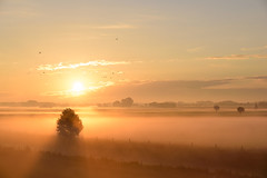 The day begins with sunshine (uw67) Tags: bocholt autumn herbest sunrise stimmung mood fog goldenestunde münsterland sonnenaufgang goldenhour