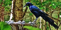 (Photosintheattic (Devy)) Tags: bird outdoor animal crow raven flickr foutain courtyard birdbath water