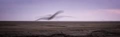 Crossing over (cottagearts123) Tags: snettisham murmuration wildlife sunset norfolk knots