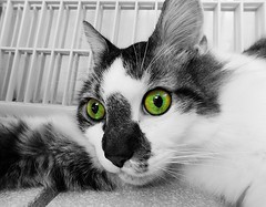 spacing out (Reinley) Tags: selective color orange green multicolor colorsplash cats bw