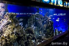 Acuario con recreacin de Comunidad de Costa Rocosa Poco Profunda (AquariumBlog.es) Tags: acuario aquarium peces fish pez marino saltwater water freshwater dulce agua corales payaso clown sepia acantharus pterois pomacanthus barcelona arrecife reef
